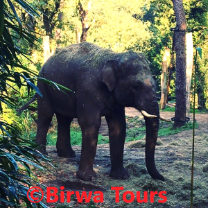 Wildlands Adventure Zoo Emmen Birwa Tours