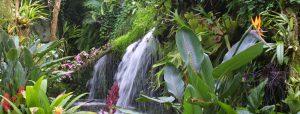 2e Kerstdag Orchideeënhoeve Birwa Tours