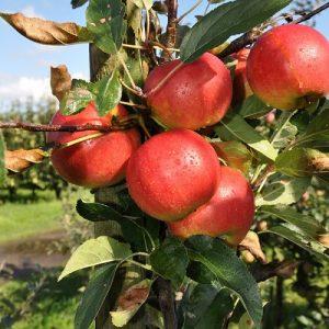 Fruitkwekerij-verhage-Birwa Tours