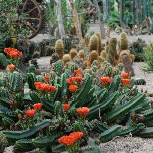 Cactusoase en ijsboerderij Birwa Tours